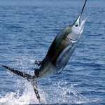 sailfish_fishing